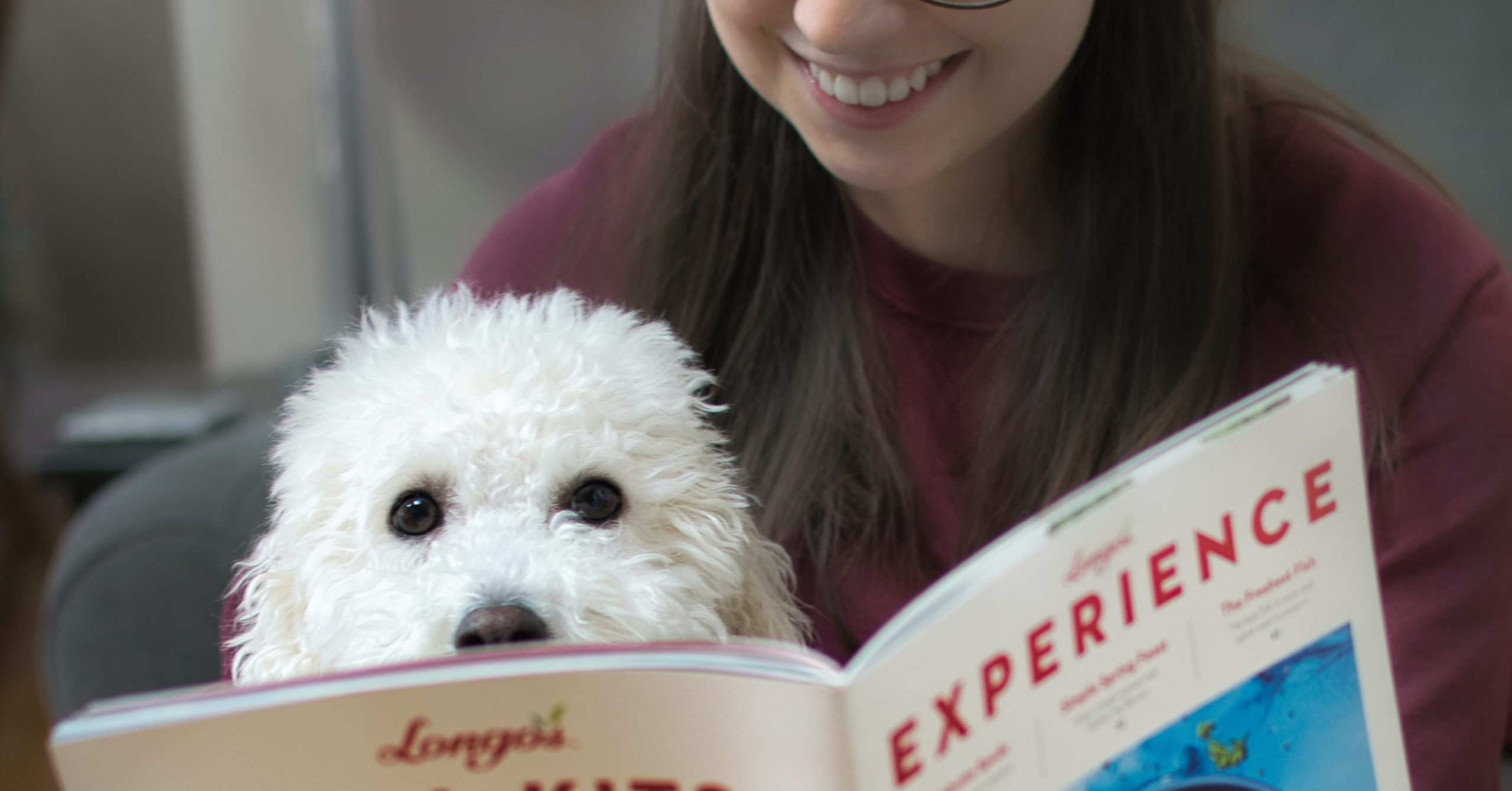 small white dog reading with owner