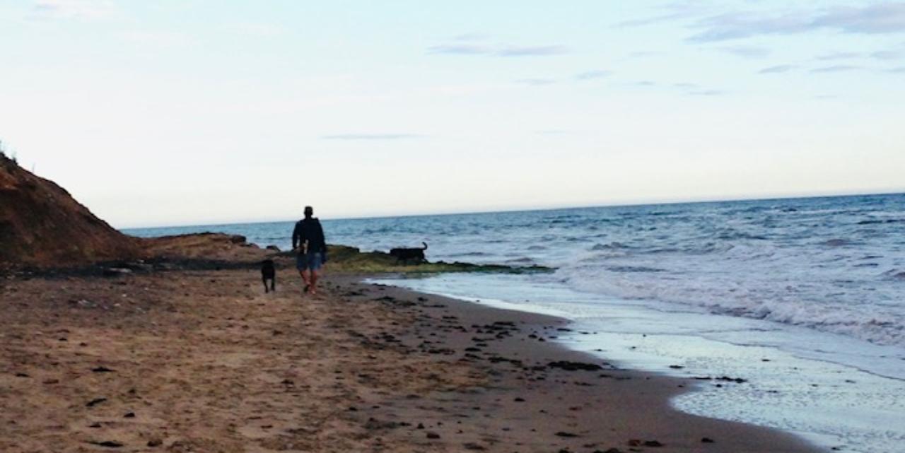 dog walking on Compton beach