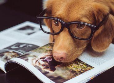 dog wearing black framed glasses reading a book